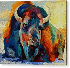 Winter Bison Acrylic Print by Marion Rose