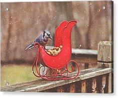 Winter Blue Jay #3 Acrylic Print