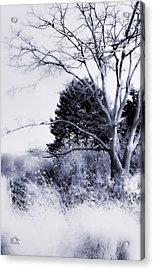 Winter Blue  Acrylic Print by Julie Palencia