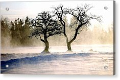 Winter Bluster Acrylic Print by Christopher Mace