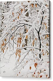 Acrylic Print featuring the photograph Winter Branches by Ann Horn