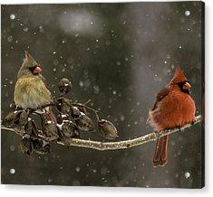 Winter Cardinals Acrylic Print