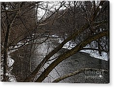 Winter Cedar Acrylic Print