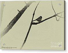 Winter Chickadee Acrylic Print
