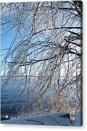 Winter Chill Acrylic Print by Margaret McDermott