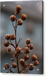 Acrylic Print featuring the photograph Winter Colors by Vadim Levin