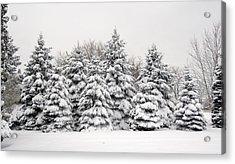 Winter Copse Acrylic Print