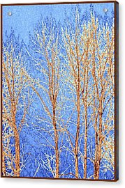 Winter Cottonwoods Abstract Acrylic Print by Will Borden