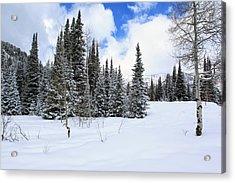 Winter Acrylic Print by Darryl Wilkinson