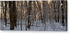 Winter Dawn Acrylic Print by Bruce Morrison