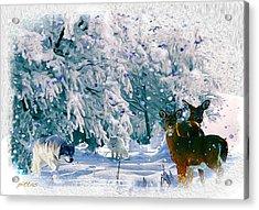 Winter Deer Acrylic Print
