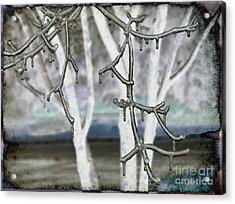 Winter Diffused Acrylic Print by Arlene Carmel