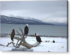 Winter Eagles Acrylic Print