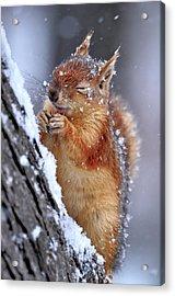 Winter Acrylic Print by Ervin Kobak?i