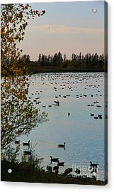 Acrylic Print featuring the photograph Winter Escape Gathering by Teresa Zieba