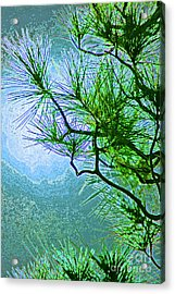 Winter Evergreen  Acrylic Print by First Star Art