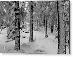 Winter Fairy Tale Forest Acrylic Print by Andreas Levi