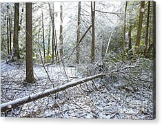 Winter Fallen Tree Acrylic Print by Thomas R Fletcher