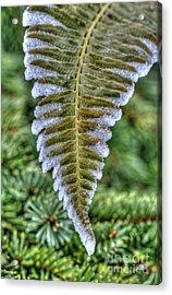 Winter Fern Acrylic Print by Sarah Schroder