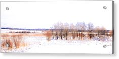 Winter Fields. In Color Acrylic Print by Jenny Rainbow