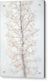 Acrylic Print featuring the photograph Winter Flower by Suzanne Powers