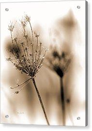 Winter Flowers II Acrylic Print by Bob Orsillo