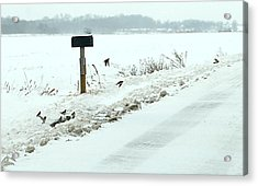 Winter Foragers Acrylic Print