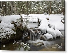Winter Forest - Lincoln New Hampshire Usa Acrylic Print by Erin Paul Donovan
