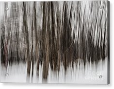 Winter Forest Abstract Acrylic Print by Elena Elisseeva