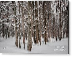 Winter Forest Abstract II Acrylic Print by Elena Elisseeva