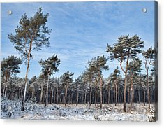 Winter Forest Covered With Snow Acrylic Print by Dirk Ercken