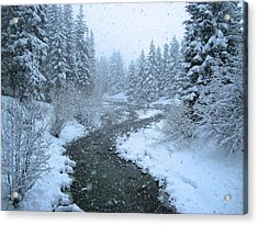 Winter Forest Acrylic Print by David Rucker