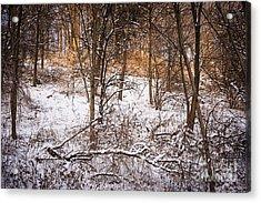 Winter Forest Acrylic Print by Elena Elisseeva