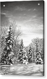 Winter Forest In Black And White Acrylic Print by Elena Elisseeva