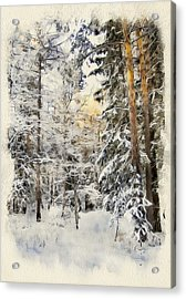 Winter Forest Landscape 44 Acrylic Print