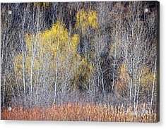 Winter Forest Landscape With Bare Trees Acrylic Print by Elena Elisseeva
