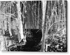 Winter Forest Trail A Negative Perspective Acrylic Print