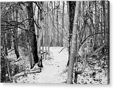 Winter Forest Trail In Black And White Acrylic Print
