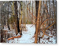 Winter Forest Trail Acrylic Print
