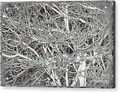 Winter Freeze Acrylic Print by Arlene Carmel