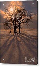 Winter Glory Acrylic Print