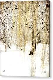 Winter Gold Acrylic Print by Julie Palencia