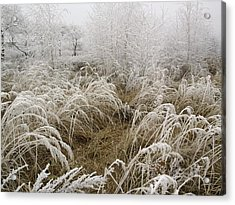 Winter Grass Acrylic Print by Magdalena Mirowicz