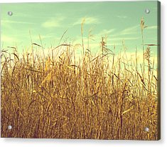 Winter Grass Acrylic Print