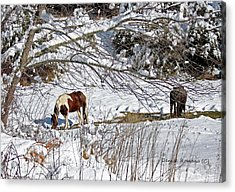 Winter Graze Acrylic Print by Denise Romano
