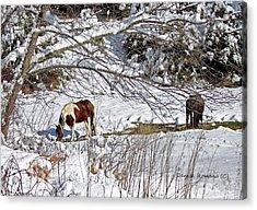 Winter Graze Acrylic Print