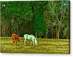 Winter Grazing In North Florida Acrylic Print