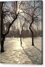 Willows In Winter Acrylic Print by Henryk Gorecki