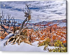 Winter In Bryce Canyon Acrylic Print by Christopher Holmes