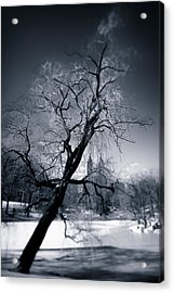 Winter In Central Park Acrylic Print by Dave Bowman